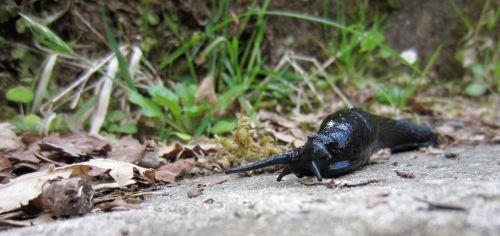 slug, fragas del eume