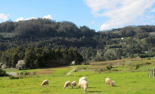 landscape in galicia spain